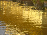 Golden temple reflections