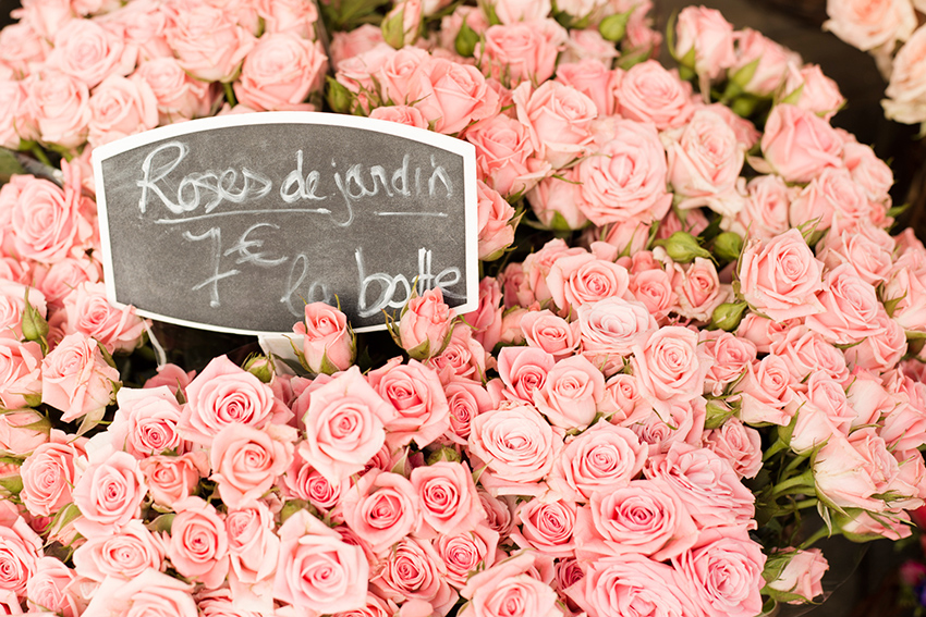 Roses at Paris Flower Market