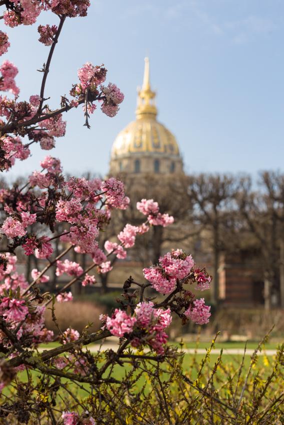 Pink Flowers and Hôtel des Invalides