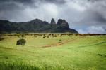 Kauai cattle herding